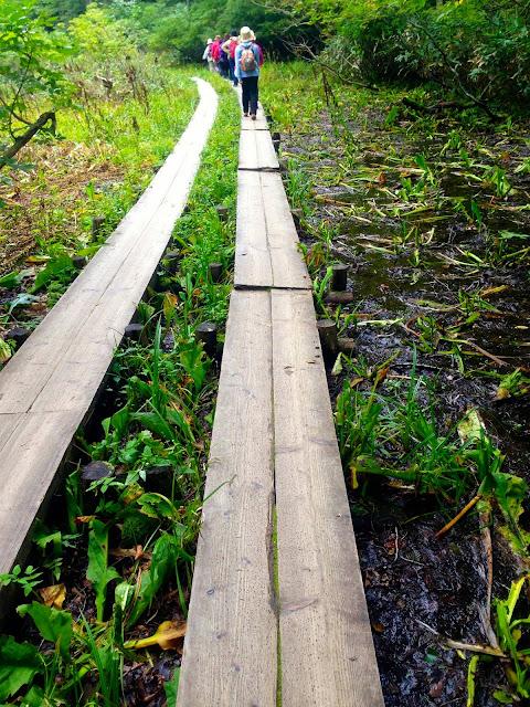 川上川脇の湿地帯その1