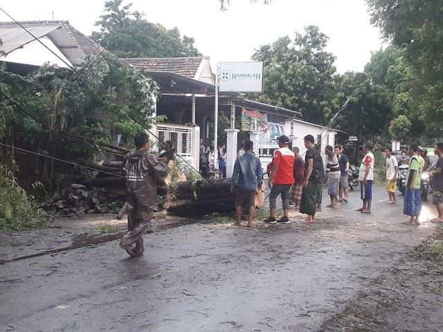 Cuaca Buruk Akibatkan Pohon Tumbang Menimpa Dua Bangunan di Grati