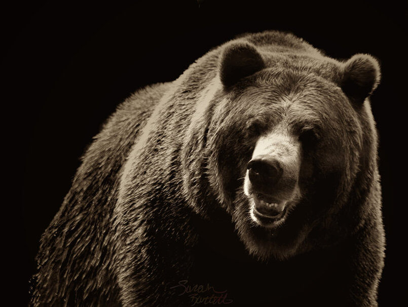 High Resolution Bear Wallpaper Hd Images Free Download Free New