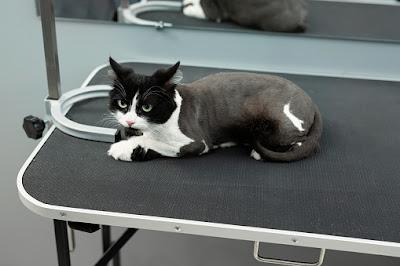 cek kesehatan kucing