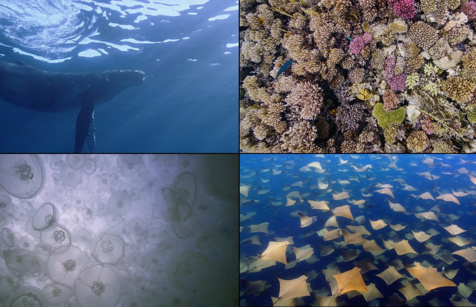 apple-tv-gets-new-underwater-screensavers