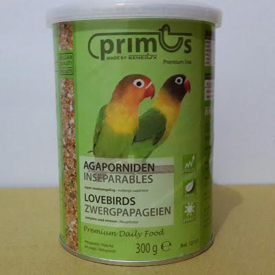 benelux premium lovebird