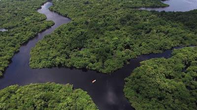 Novo Código Florestal pode aumentar o desmatamento na Amazônia