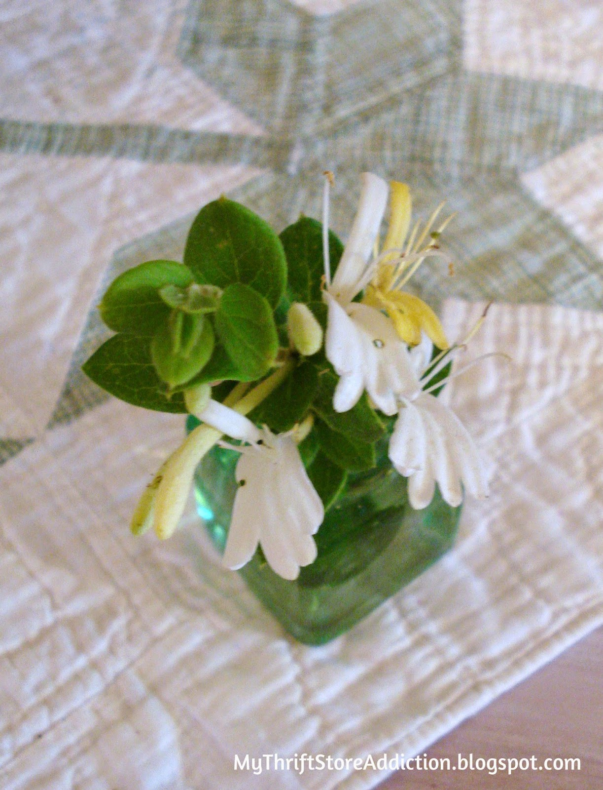Fragrant honeysuckle