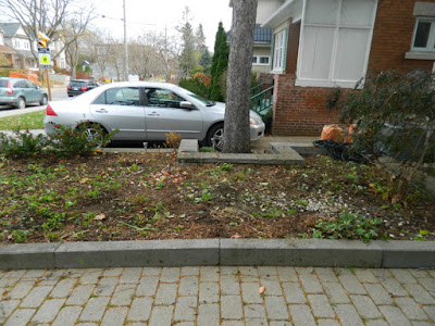 Bedford Park Toronto Fall Front Yard Cleanup After by Paul Jung Gardening Services Inc.--a Toronto Organic Gardening Company