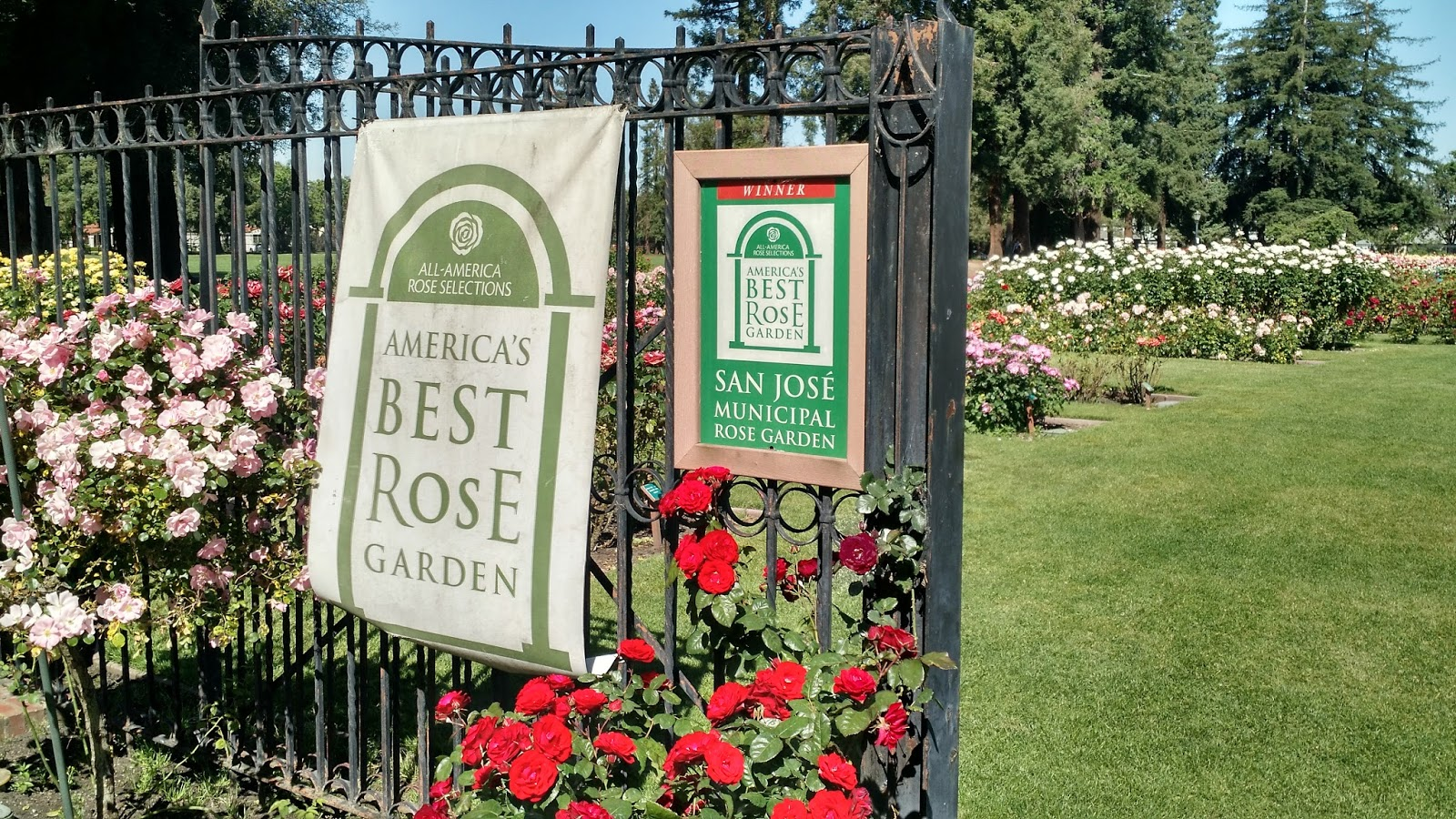 Roses In Garden: Paintsites Blog: San Jose Municipal Rose Garden May 4, 2017