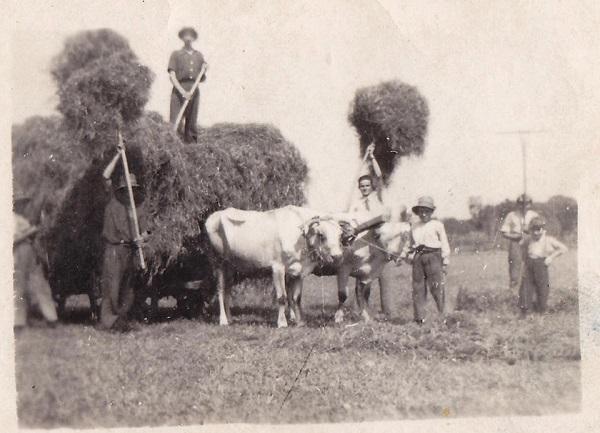 lavoro africolo, buoi, fieno, contadini