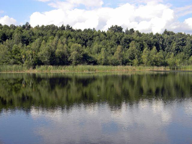 Liny, Babimost, Kargowa