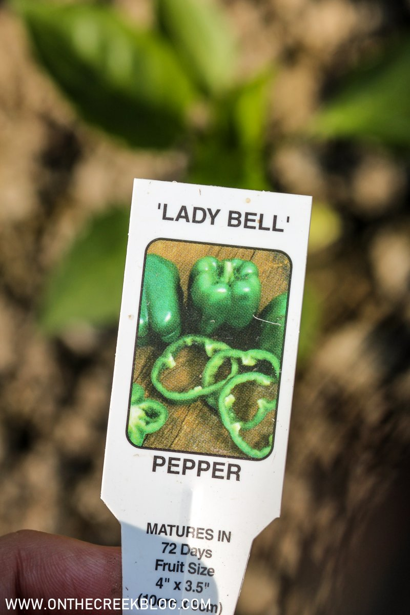 Peppers in the garden | On The Creek Blog