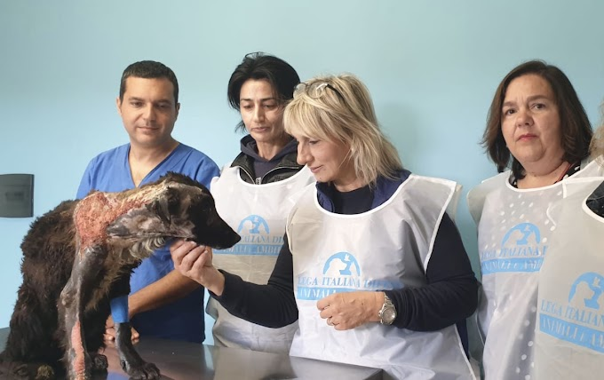 Ha trovato casa Giulia, la cagnolina salvata dalla Leidaa