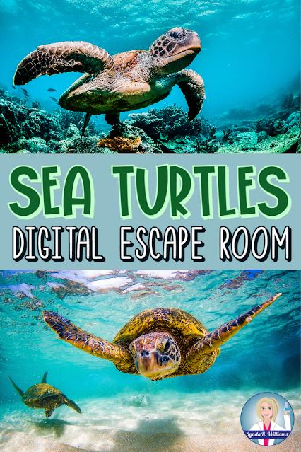 Sea Turtle Digital Escape Room