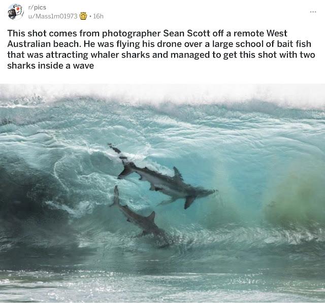 Sharks inside a wave
