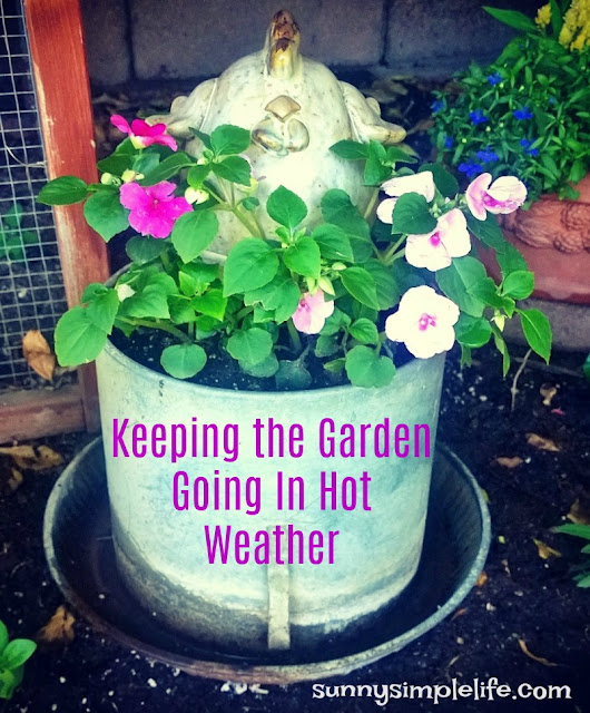 chicken waterer garden, container gardening