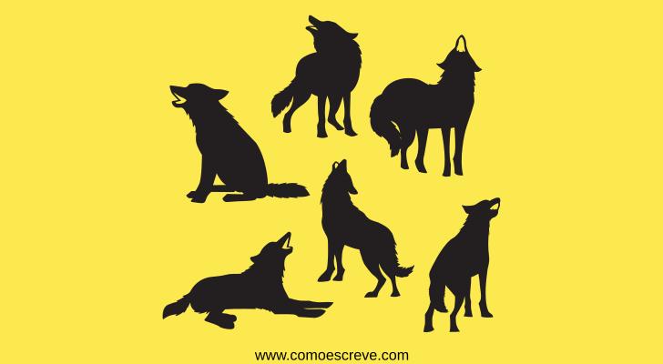 Coletivo de lobos: matilha ou alcateia?