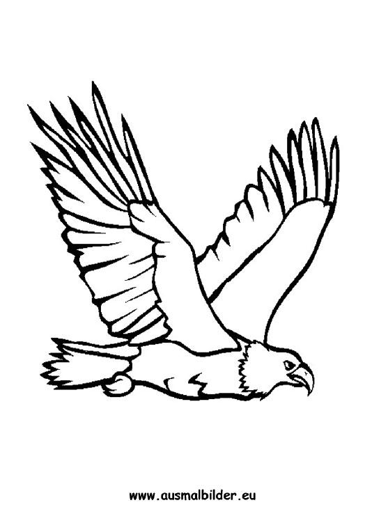 ausmalbilder adler bild malvorlage malvorlagen vögel