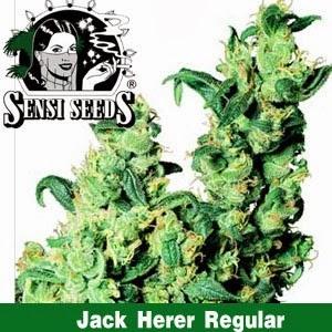 jack herer Sensi Seeds