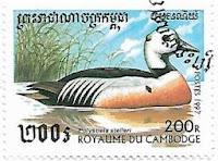 Selo Pato Êider-de-steller