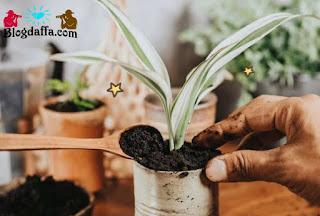 Lakukan pemupukan pada tanaman hias dalam ruangan