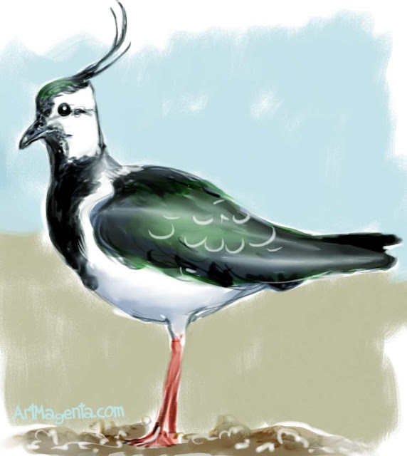 Northern Lapwing is a bird drawing by ArtMagenta