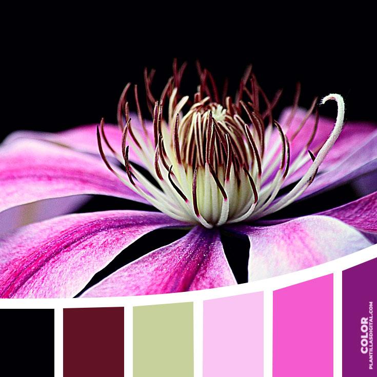 color_132