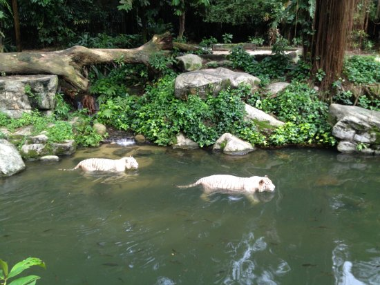 Singapura Zoo