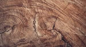 Penyusutan kayu merupakan terjadinya proses penguapan air di dalam dinding sel di bawah titik jenuh serat. Berdasarkan hal tersebut diketahui bahwa penyusutan secara umum terjadi ketika adanya penurunan kadar air di dalam kayu. Penyusutan yang terjadi pada suatu kayu memiliki pengaruh penting dalam perubahan dimensi suatu kayu. Cara mencegah atau membatasi penyusutan kayu menurut Dumanauw (1990) adalah dengan meminimalkan kadar air atau berada pada keseimbangan. Hal tersebut dapat dilakukan dengan cara sebagai berikut.