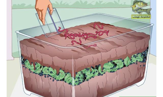 أسهل طريقة لعمل مزرعة دود الارض لصيد السمك | معلومة تهمك فى صيد السمك