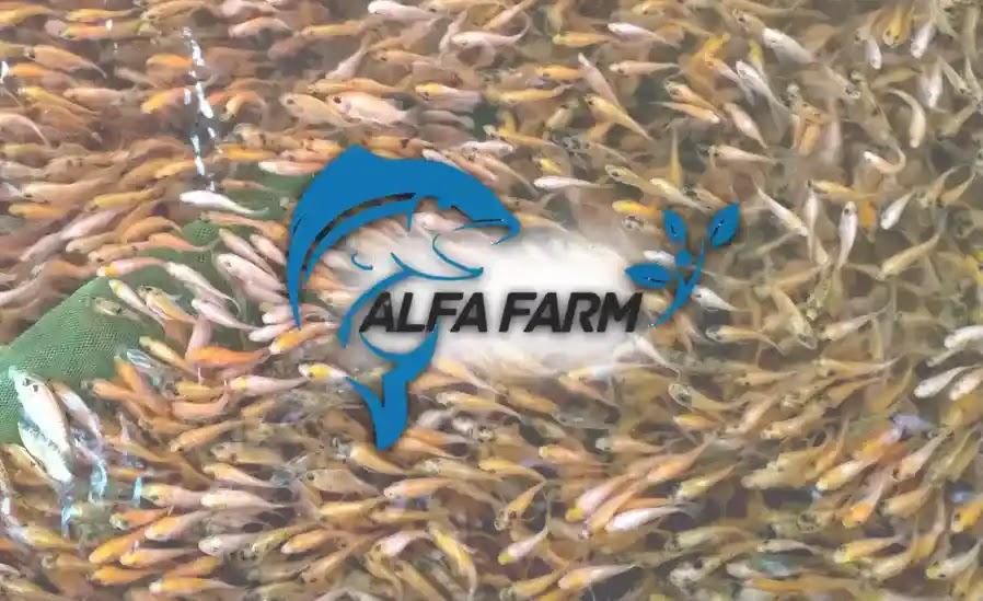 bibit ikan nila alfa farm