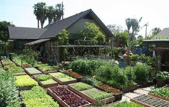 kebun rumah sayur