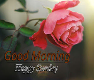 New Good Morning 4k Full HD Images Download For Daily%2B95