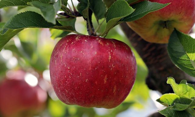 Buah apel