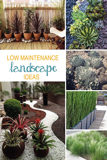 Best plants for a modern and low maintenance landscape | sprinkledwithcolor.com
