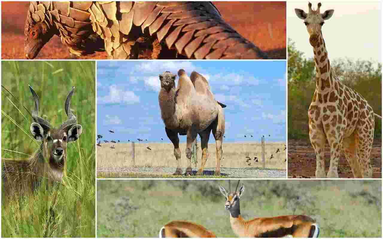 name of animals az