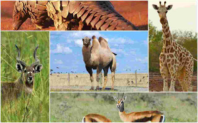 list of african animals names a to z