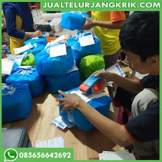Jual Telur Jangkrik di Surabaya