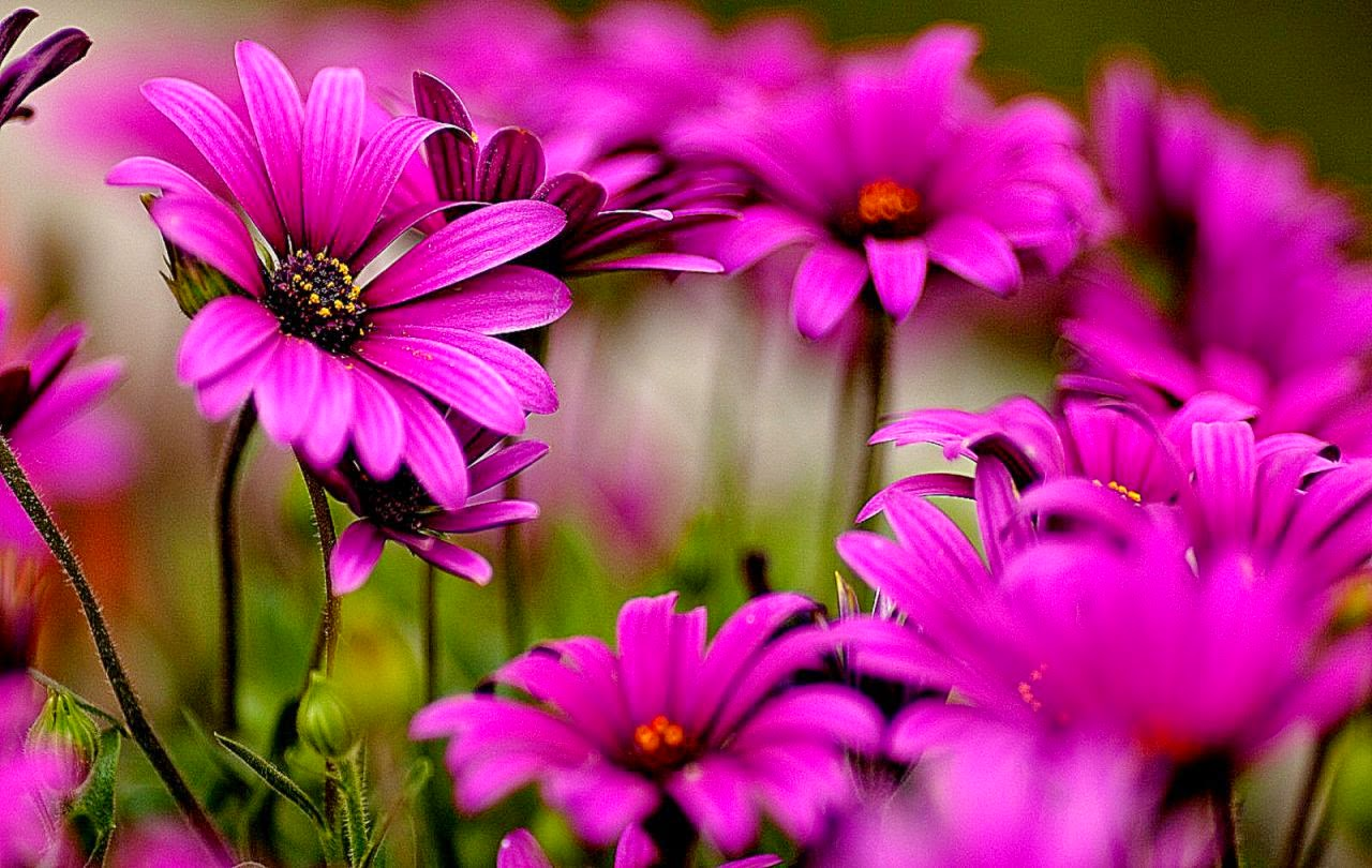 40 Beautiful Flower Wallpapers For Your Desktop Mobile And: Beautiful Screensavers For Computer