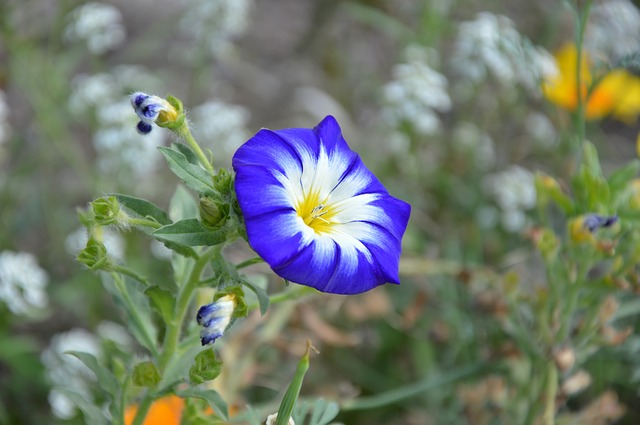 y nghia phong thuy hoa da yen thao