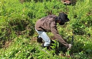 Kegiatan silvikultur umumnya memiliki beberapa tahapan yang saling berkaitan. Di Indonesia, tahapan pelaksanaan kegiatan sistem TPTI menurut Wahyudi (2013) mengacu pada surat Keputusan Direktur Jenderal Perusahaan Hutan Nomor 151/Kpts/IV-BPHH/1993 tanggal 19 Oktober 1993. Adapun tahapan kegiatan sistem silvikultur TPTI adalah sebagai berikut: