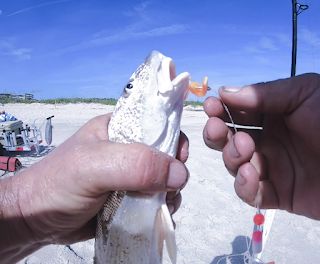 Whiting Florida East Coast Surf Fishing Canaveral National Seashore Playalinda Beach