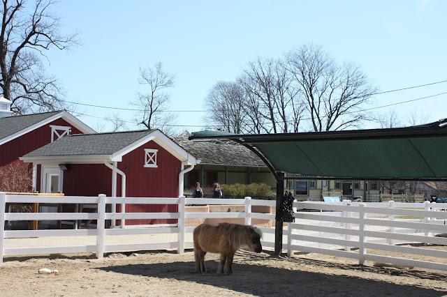 Shetland Pony at the Cosley Zoo