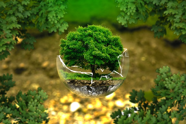 Environmental Protection Nature Conservation Ecology