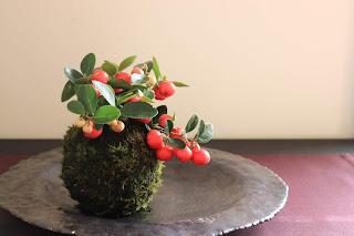 山野草の大実ゴールテリアの苔玉