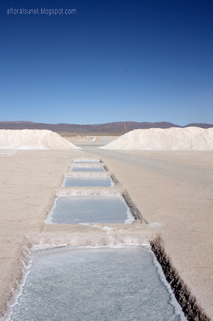 Argentina saltlakes salinas