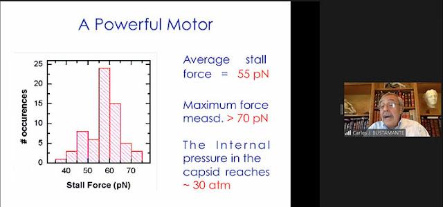 Measured force of Molecular Motors  (Source: Carlos Bustamante, UCB, at APS Far West 2020 meeting)