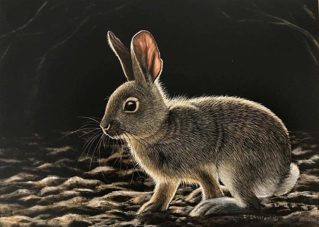 09-Rabbit-Cathy-Sheeter-Wildlife-Scratchboard-Drawings-www-designstack-co