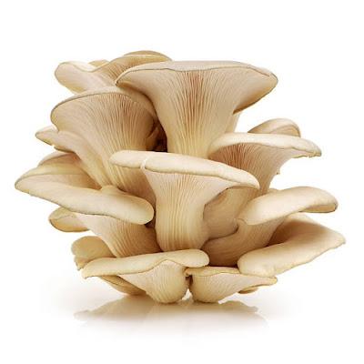 Mushroom Supplier Company in Jamnagar