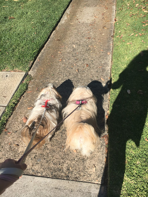 Walking with the Puppies