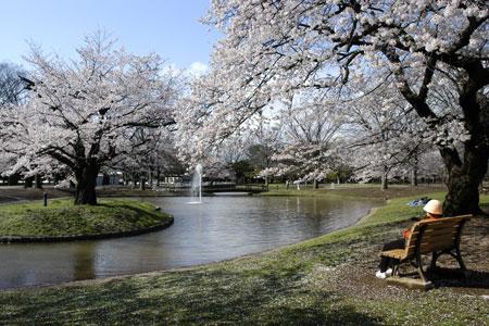 Taman Yoyogi