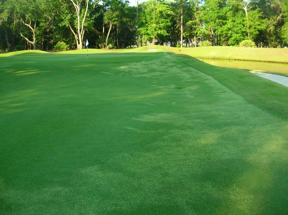 Colleton River Club Golf & Agronomy: Removing the Zoysia ...