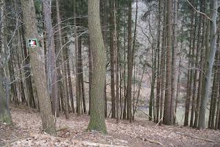 Blick nach unten in den Wald